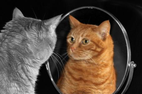 Фото Кот смотрит на свое отражение в зеркале