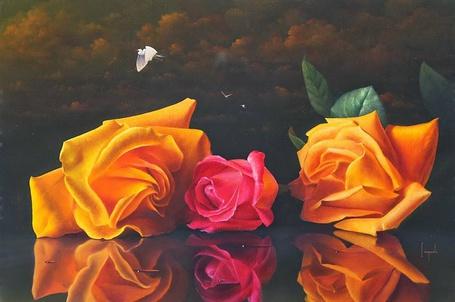 Фото Розы на гладкой поверхности, художник Dario Campanile