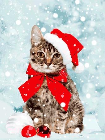 Фото Кошка, сидящая на снегу в шапке Санта-Клауса / Santa Claus и красным бантом на шее