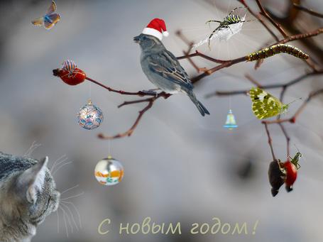 ���� ��� ������� �� ������ � �����, ������� �� ���������� ��������� ����� (� ����� �����!) (� NoFan), ���������: 19.12.2014 22:47