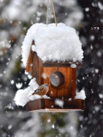 Фото Снегирь сидит на скворечнике