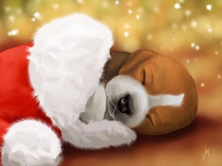 Фото Маленький щенок спит в шапке Санта - Клауса под падающими вниз снежинками