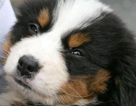 Фото Лукавый взгляд крупного щенка