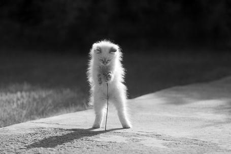 Фото Маленький котенок с цветочком в лапках стоит на дорожке