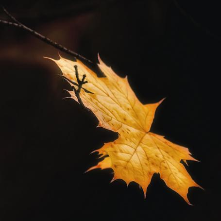 Фото Осенний лист на ветке крупным планом