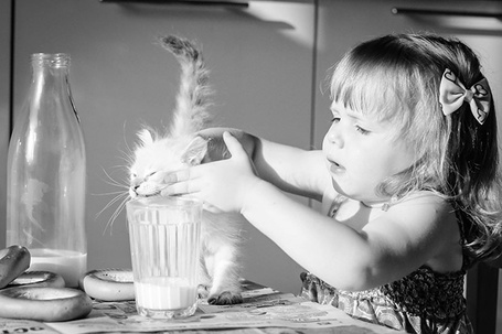 Фото Маленькая девочка сидя за столом, заставляет котенка пить молоко из высокого стакана
