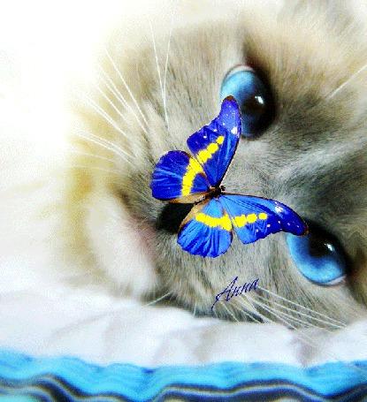 Фото Кот смотрит на бабочку, моргает глазами