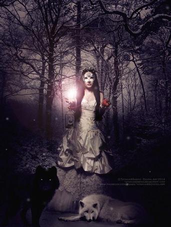 Фото Девушка в маске с сиянием и клеткой в руке и черным и белым волком у ног стоит в туманной лесу, by TatianaSSabino