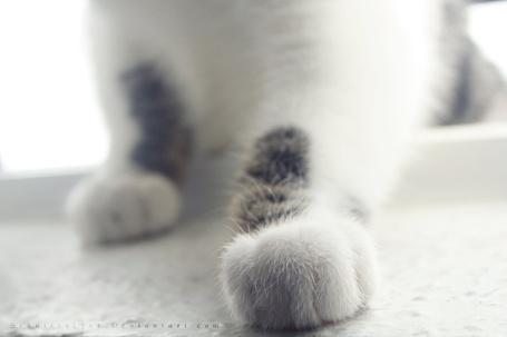 Фото Лапки котенка, ву Schnitzelyne