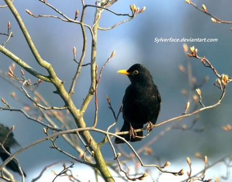 Сколько лет живут птицы  zoofaynaru