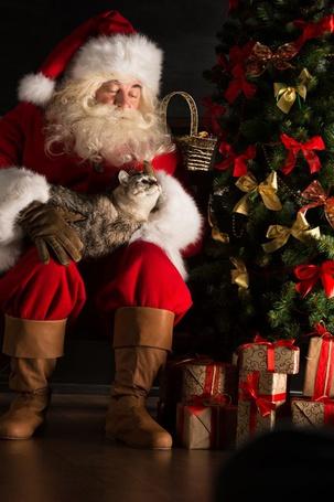 Фото Санта-Клаус / Santa Claus держит кота на коленях