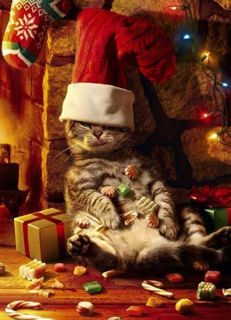 Фото Усыпанный сладостями кот в шапке Санта-Клауса показывает язык