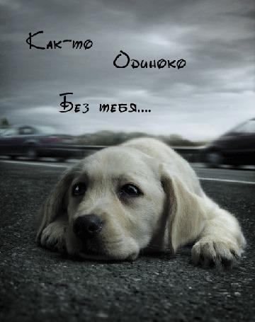 Фото Щенок лежит около дороги, Как-то одиноко без тебя