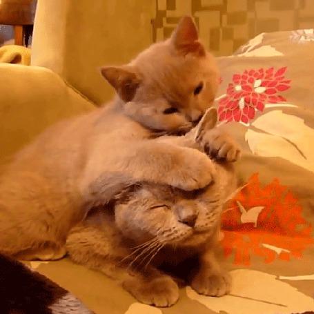 Картинки, картинка гиф котята целуются