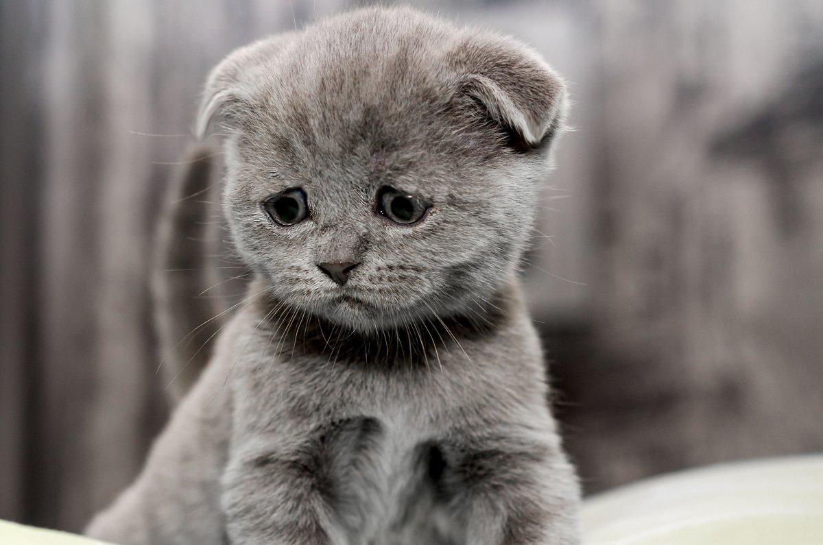 парень картинки грустный котенок рольставни помогают