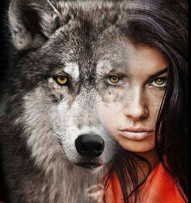 Волки виды волков описание характер ареал обитания