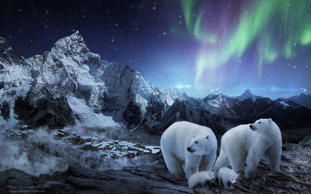 видео северное сияние и белые медведи