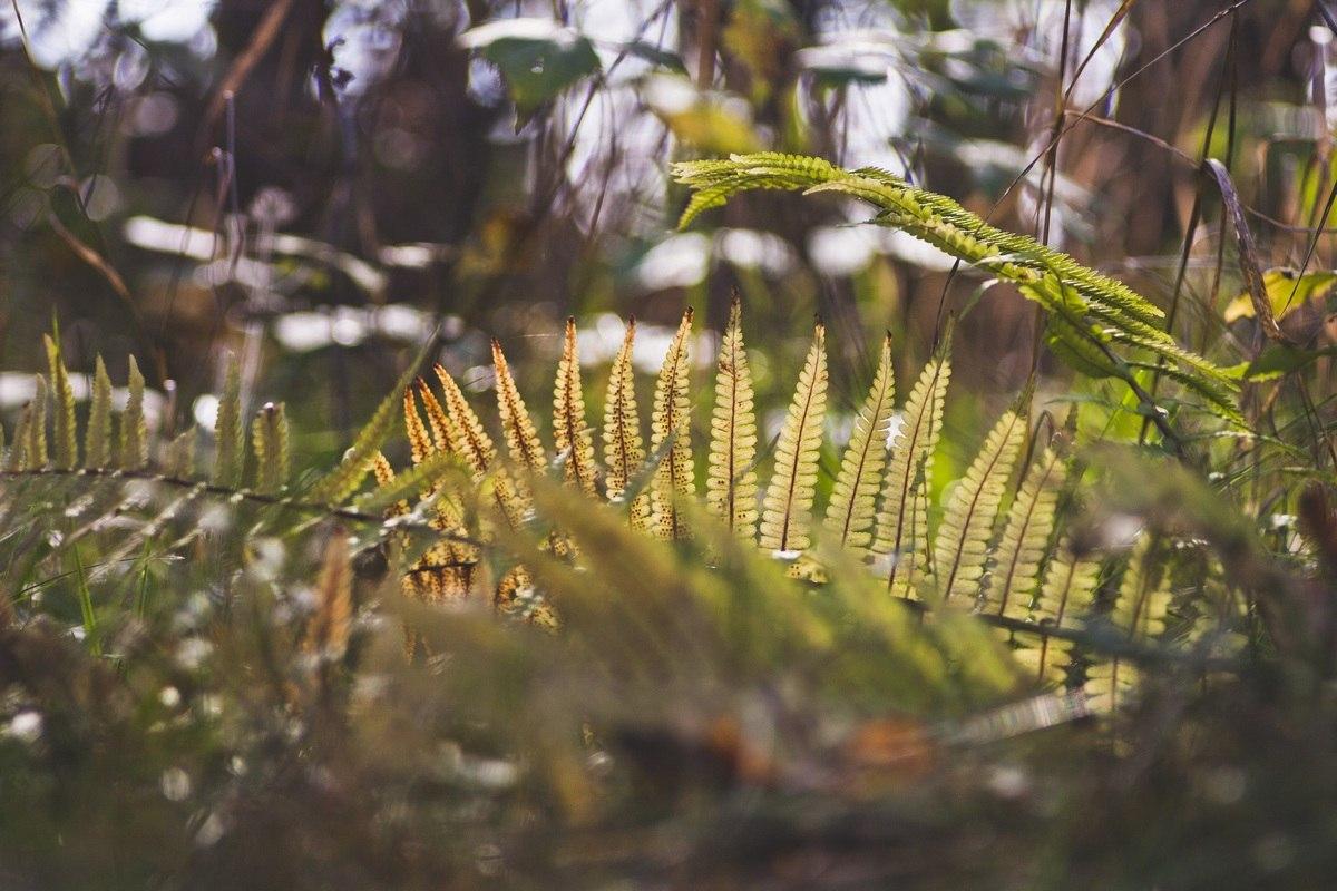 Фото ветка папоротника в лесу