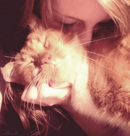 знакомство кошки с котом