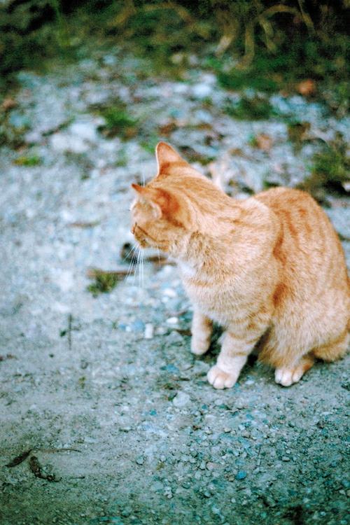 Тэги животные кошки природа