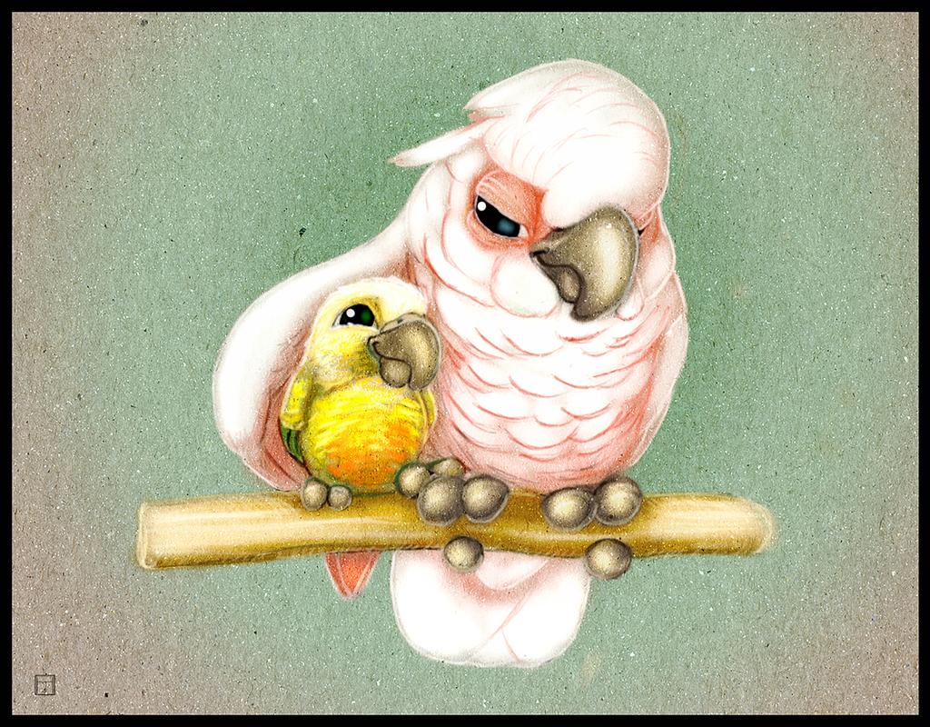 Прикольные попугаи картинки рисунки