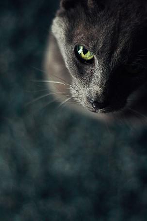 Фото Кошка с зелеными глазами смотрит вверх