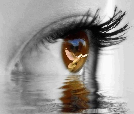 Фото Глаз над водой, в зрачке виден голубь