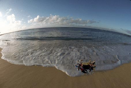 Фото Краб стоит на песке перед набегающей волной