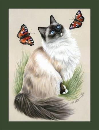 Фото Кошка смотрит на бабочек, Художник Ирина Гармашова/