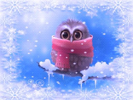 Фото Совенок в шарфике сидит на ветке,(Что-то стало холодать)