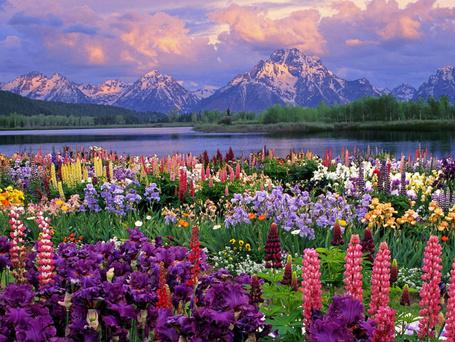 Фото Поляна цветов возле горного озера