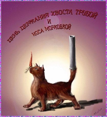 Фото Кот с морковкой на носу,(День держания хвоста трубой и носа морковкой)