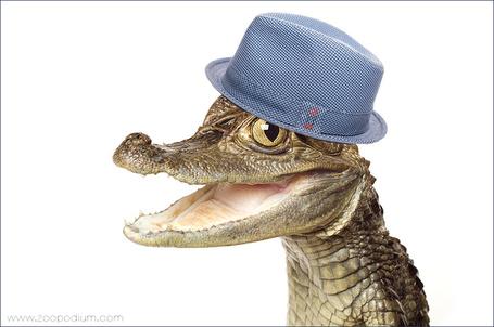 Фото Маленький крокодил в шляпе