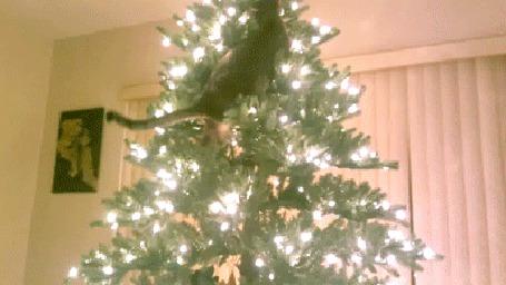 Фото Кот забирается на новогоднюю елку, а потом не знает, как оттуда слезть