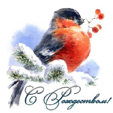 Фото Птица сидит на елочной ветке и держит в клюве веточку с ягодами,(С Рождеством)