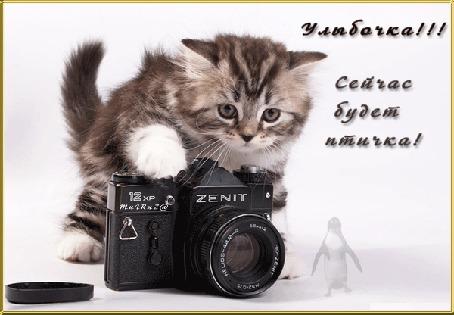 Фото Котенок снимает фотоаппаратом фирмы zenit (Улыбочка! Сейчас будет птичка!)