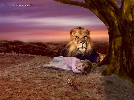 Фото Лев охраняет спящую девочку