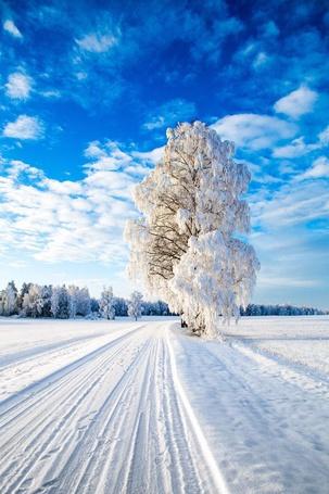 Фото Покрытые снегом деревья вдоль заснеженной дороги
