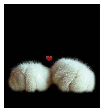 Фото Моргающий черный кот с белыми лапками