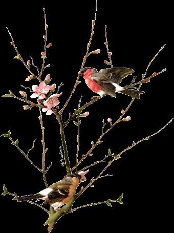 Фото Две птицы скачут к друг другу по дереву