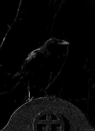 Фото Черная ворона сидит на памятнике