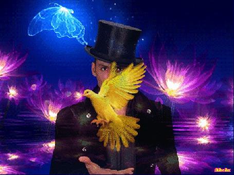Фото Мужчина в цилиндре на голове выпускает желтого голубя на фоне светящихся цветов и летающей бабочки, by Akela