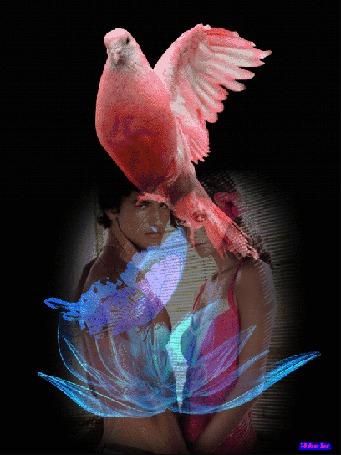 Фото Парень и девушка стоят, взявшись за руки, на ихнем фоне кружится светящийся цветок с сидящей и машущей крыльями бабочкой и сидящим сверху розовым голубем, by Akela