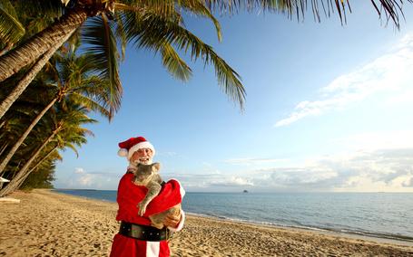 Фото Санта Клаус стоя на берегу океана, улыбается и держит на руках пальмового медвежонка коалу