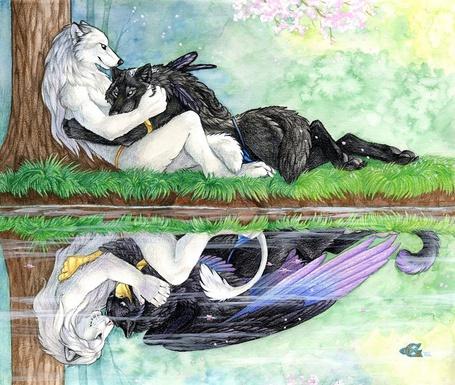 Фото Белая волчица сидит под деревом и обнимает прильнувшего к ней черного волка, в воде видно их отражение
