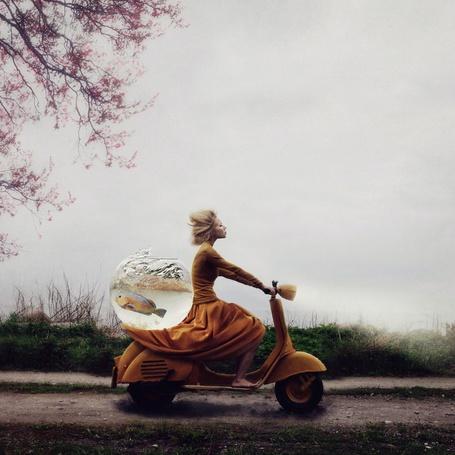 Фото Девушка везет аквариум с рыбой на багажнике мотоцикла