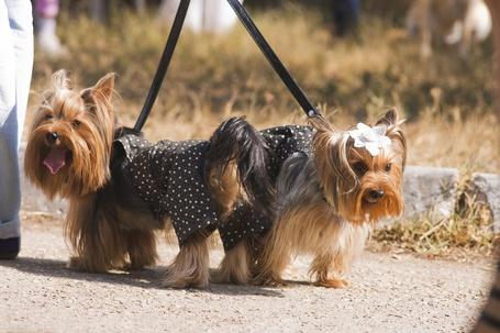Фото Собак вывели на прогулку/