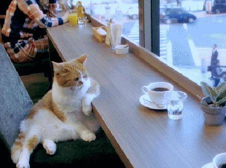 Фото Кот сидит в кафе за чашкой кофе и глядя в окно, о чем - то размышляет