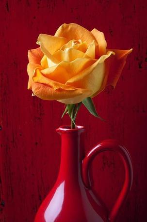 Фото Желтая роза в красном кувшине на красном фоне
