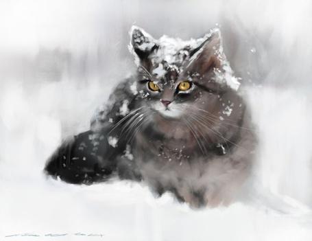 Фото Заснеженная кошка с янтарными глазами